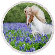 Horse Running By Lupines. Purebred Round Beach Towel