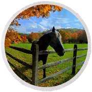 Horse Under Tree By Fence Round Beach Towel by Dan Friend