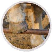 Horses 4 Round Beach Towel