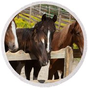 Horses Behind A Fence Round Beach Towel