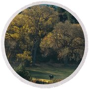 Horses In A Backlit Field With Fall Colored Trees Sedo Round Beach Towel