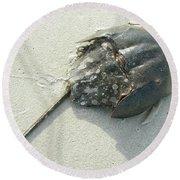 Horseshoe Crab - Limulus Polyphemus Round Beach Towel