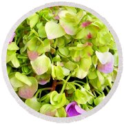 Hortensia With Touch Of Pink Round Beach Towel