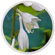 Hosta Round Beach Towel