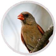 Hot Cardinal Round Beach Towel