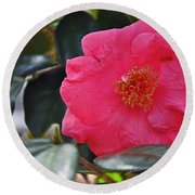 Hot Pink Camellia Round Beach Towel