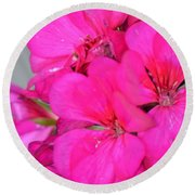 Hot Pink In February Round Beach Towel