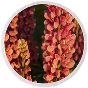 Hot Pink Lupines From My Mother's Garden Round Beach Towel