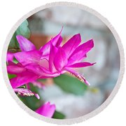 Hot Pink Christmas Cactus Flower Art Prints Round Beach Towel