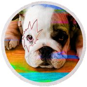 House Broken Bulldog Puppy Round Beach Towel