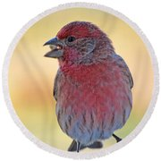 House Finch II Round Beach Towel