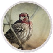 House Finch Two Round Beach Towel