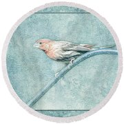 House Finch With Colored Sketch Effect Round Beach Towel