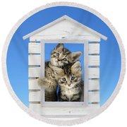 House Of Kittens Ck528 Round Beach Towel