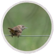 House Wren Round Beach Towel