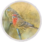 Housefinch Pair With Texture Round Beach Towel