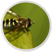 Hoverfly On A Leaf Round Beach Towel