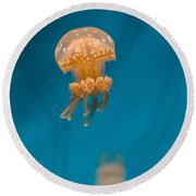 Hovering Spotted Jelly 1 Round Beach Towel
