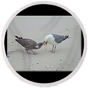 How To Eat A Blue Crab - Great Black Backed Gull In Training Round Beach Towel