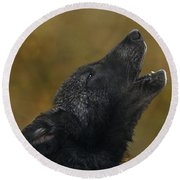 Howling Gray Wolf Pup Endangered Species Wildlife Rescue Round Beach Towel