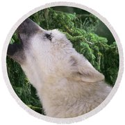 Howlling Arctic Wolf Pup Endangered Species Wildlife Rescue Round Beach Towel