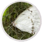Huge White Morpho Butterfly Round Beach Towel