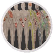 Human Systems In The Female Anatomy Round Beach Towel