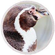 Humboldt Penguin Portrait Round Beach Towel