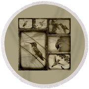 Hummingbird Family Portraits Round Beach Towel