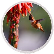 Hummingbird Feast  Round Beach Towel