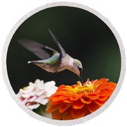 Hummingbird In Flight With Orange Zinnia Flower Round Beach Towel by Christina Rollo