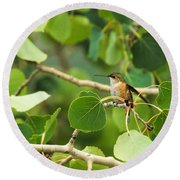 Hummingbird In Tree Round Beach Towel