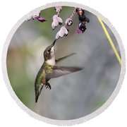 Hummingbird - Little Sipper Round Beach Towel