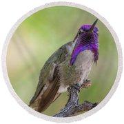 Hummingbird Male Costa Round Beach Towel