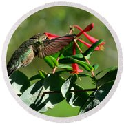 Hummingbird Morning Round Beach Towel