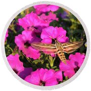 Hummingbird Moth Round Beach Towel