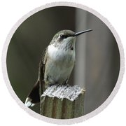 Hummingbird Perched Round Beach Towel