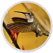 Hummingbird Round Beach Towel