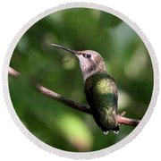 Hummingbird - Ruby-throated Hummingbird - Detail Round Beach Towel