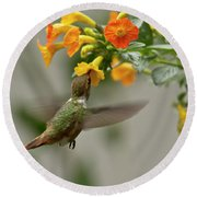 Hummingbird Sips Nectar Round Beach Towel