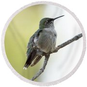 Hummingbird Sitting On A Branch Round Beach Towel