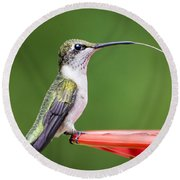 Hummingbird Sticky Her Tongue Out Round Beach Towel