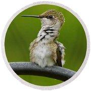 Hummingbird Stretching  Round Beach Towel