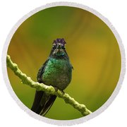 Hummingbird With A Lilac Crown Round Beach Towel