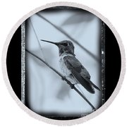 Hummingbird With Old-fashioned Frame 1 Round Beach Towel