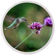 Hummingbird With Purple Verbena Round Beach Towel