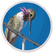 Hummingbird Yawn With Tongue Round Beach Towel