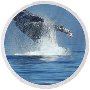 Humpback Whale Breaching Round Beach Towel by Bob Christopher