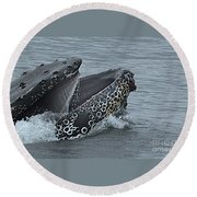 Humpback Whale  Lunge Feeding 2013 In Monterey Bay Round Beach Towel