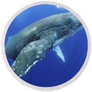 Humpback Whale Near Surface Round Beach Towel